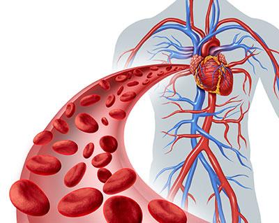 Blutgerinnungsstörung In Der Schwangerschaft Symptome