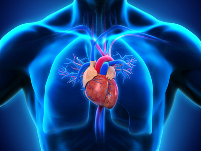 Entwicklung und Funktion des Herz-Kreislauf-System – Medizinlexikon ...