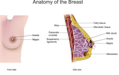 Der schwanger brennen brustwarzen Schmerzende Brustwarzen