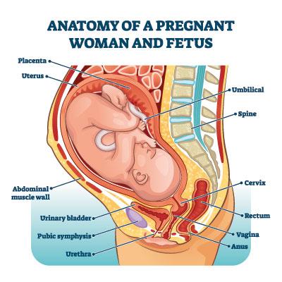 Frühschwangerschaft gebärmutter ertasten