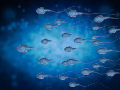 Spermarche – Funktion, Aufgabe & Krankheiten | MedLexi.de