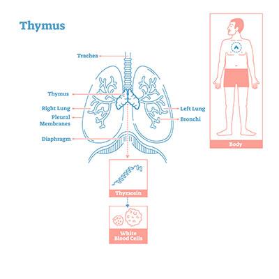 Thymom Symptome