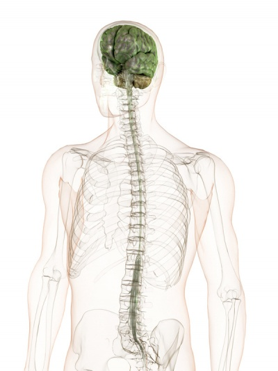 symptome ms diagnose