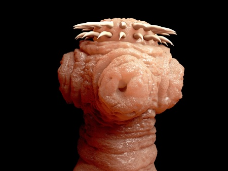 Was die Analyse des Blutes bei den Würmern vorführen wird