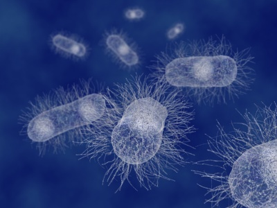 Escherichia coli prostata cura