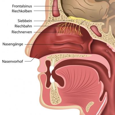 Geruchsstörung (Riechstörung) – Ursachen, Symptome, Behandlung ...