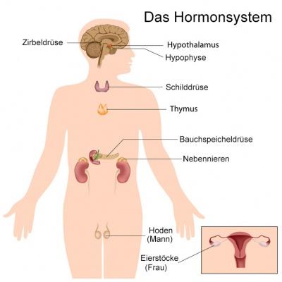 Zu wenig sexualhormone beim mann