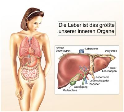 Lebererkrankungen - Ursache, Symptome, Behandlung, Vorbeugung