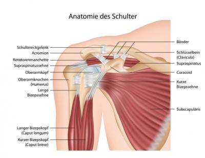 anatomie mensch rücken