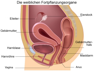 Inside der Vaginal beim Sex